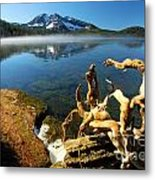 Twisted On The Shore Metal Print