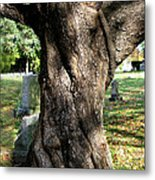 Twisted Tree Metal Print by Janice Paige Chow
