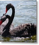 Two Black Swans Metal Print