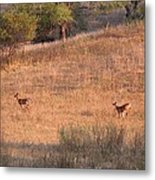 Two Bucks On The Run Metal Print