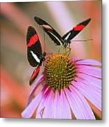 Two Colorful Butterflies On Cone Flower Metal Print