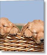 Two Cute Puppies Asleep In Basket Metal Print