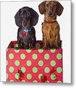 Two Dachshund Puppies Inside A Polka Metal Print