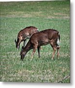 Two Does Grazing Metal Print