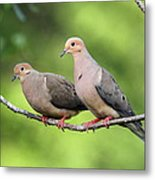 Two Doves Metal Print