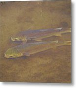 Two Fish In The Laguna Madre Metal Print