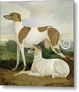 Two Greyhounds In A Landscape Metal Print