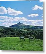 Two Horses Grazing In A Field Metal Print