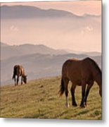 Two Horses Grazing On Mountain Top In Early Mornin Metal Print by Christiana Stawski