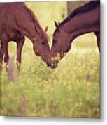 Two Horses In Field Metal Print
