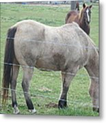 Two Horses Up Front Metal Print