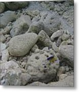 Two Lonely Fish Metal Print