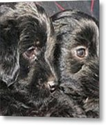 Two Matched Pups Metal Print