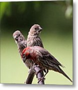Two Offspring Metal Print