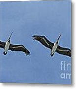 Two Pelicans In Flight Metal Print