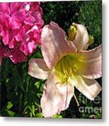 Two Pink Neighbors- Lily And Phlox Metal Print
