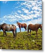 Two Quarters And An Appaloosa Metal Print