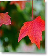 Two Red Maple Leaves Metal Print