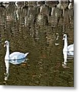 Two Swan Floating On A Pond  Metal Print