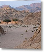 Two Trees In The Desert Metal Print by Frits Selier