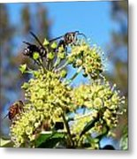 Two Wasps And A Bee Metal Print