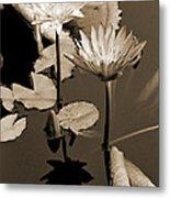 Two Waterlilies Sepia Metal Print