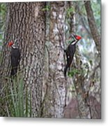 Two Woodpeckers Metal Print