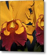 Two Yellow And Red Orchids Metal Print