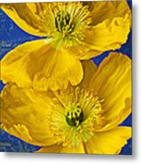 Two Yellow Iceland Poppies Metal Print