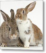 Two Young Rabbits Metal Print