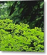 Umbrella Of Trees In Forest Metal Print