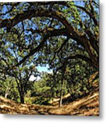 Under The Oak Canopy Metal Print