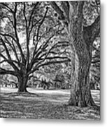 Under The Oaks Metal Print