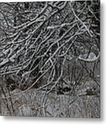 Under The Old Apple Tree Metal Print