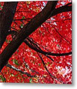 Under The Reds Metal Print