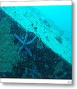 Under The Sea C Metal Print