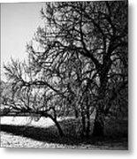Under The Waiting Tree Metal Print
