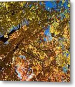Underside Of Fall Metal Print