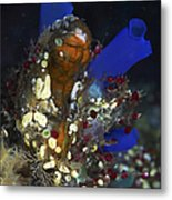 Underwater Bouquet Formed By Cluster Metal Print