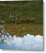 Underwater Landscape Metal Print by Lisa Holmgreen