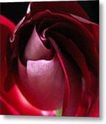 Unfolding Rose Metal Print