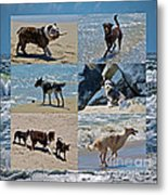 Uninhibited Creatures Metal Print