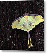 Unique Butterfly Resting On Tree Bark Metal Print