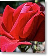 Unrolling The Red Carpet Metal Print