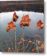 Untitled 102 Metal Print