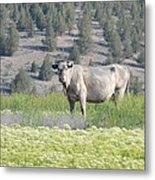Unusual Colored Cow Metal Print