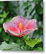 Unusual Flower Metal Print