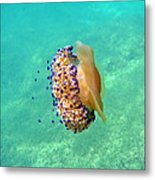 Unwelcome Jellyfish Metal Print