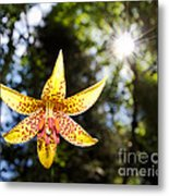 Up And Under There Was Beauty Metal Print
