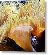 Up Close And Personal Wil 127 Metal Print